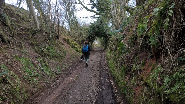 heather sunken lane